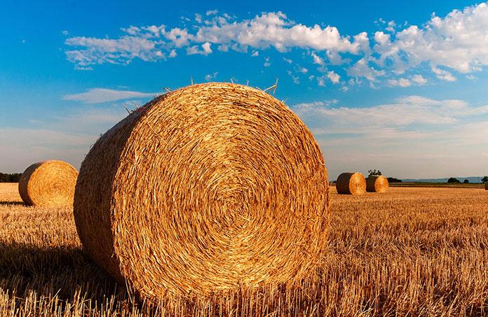 Błyskawiczne zwalczanie chwastów dwuliściennych kukurydza